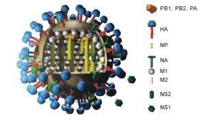Virus H1N1 (Clique para ampliar)